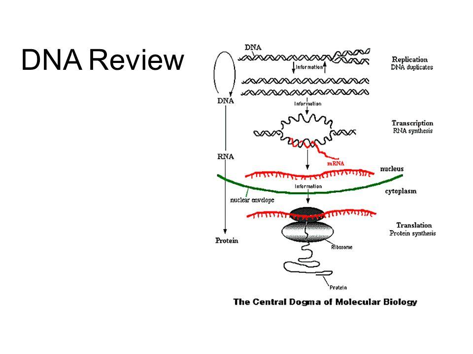 DNA infolding of plasma membrane Fig. 18-8a, p.294 Current Nitrobacter