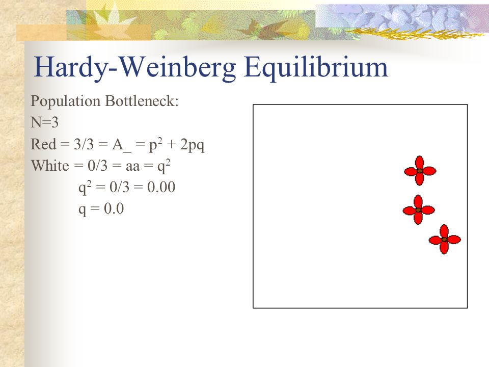 Hardy-Weinberg Equilibrium Population Bottleneck: N=3 Red = 3/3 = A_ = p 2 + 2pq White = 0/3 = aa = q 2 q 2 = 0/3 = 0.00 q = 0.0