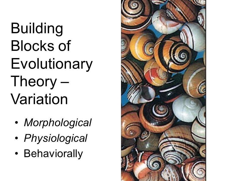 Origins – Speciation or Macroevolution