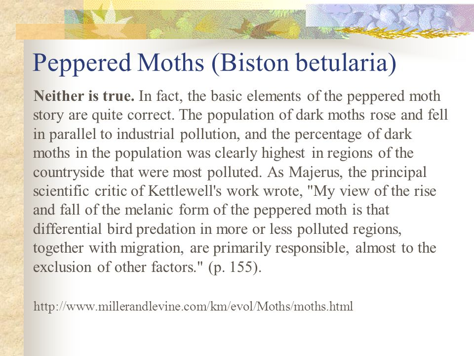 Peppered Moths (Biston betularia) Neither is true. In fact, the basic elements of the peppered moth story are quite correct. The population of dark mo