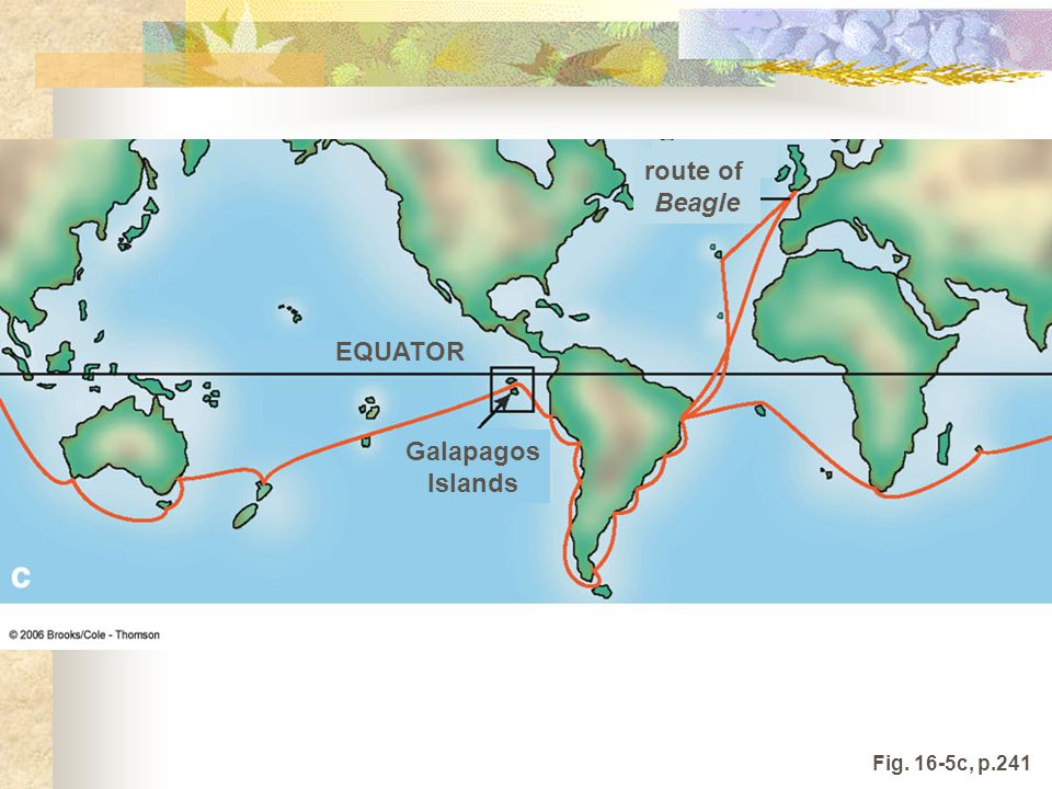 EQUATOR Galapagos Islands route of Beagle Fig. 16-5c, p.241