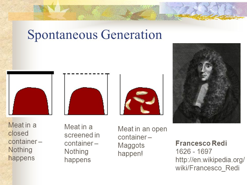 Spontaneous Generation Francesco Redi 1626 - 1697 http://en.wikipedia.org/ wiki/Francesco_Redi Meat in a closed container – Nothing happens Meat in a