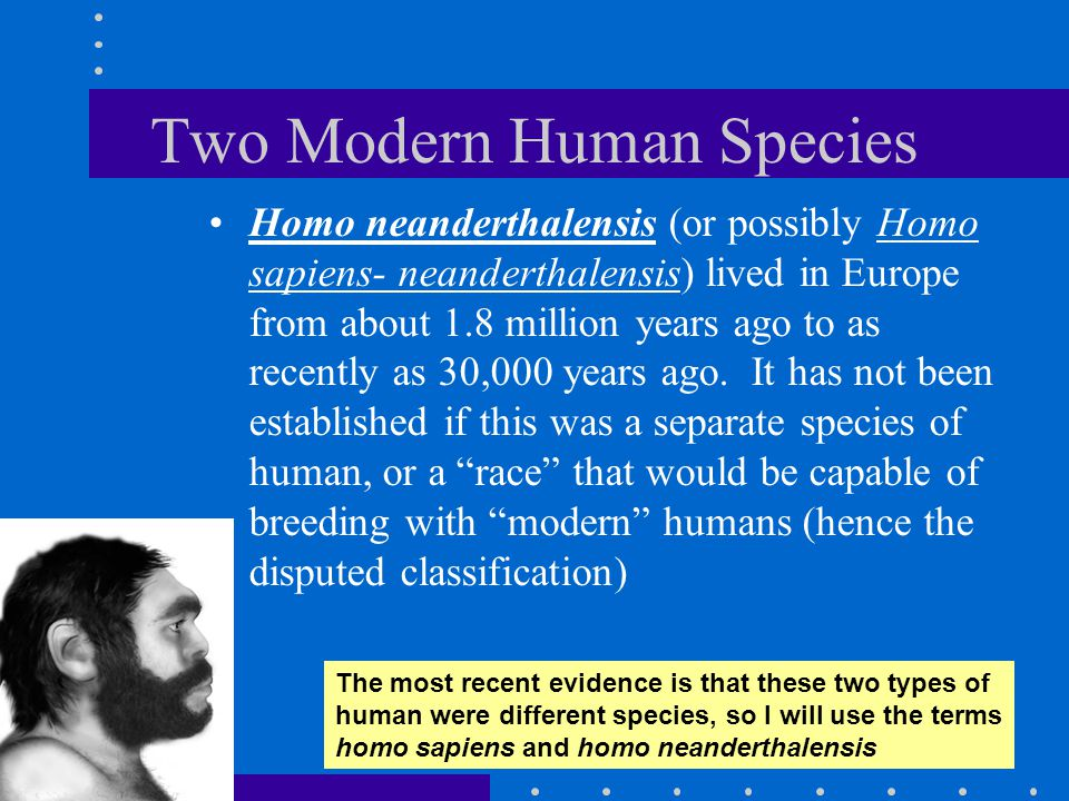 Two Modern Human Species Homo neanderthalensis (or possibly Homo sapiens- neanderthalensis) lived in Europe from about 1.8 million years ago to as rec