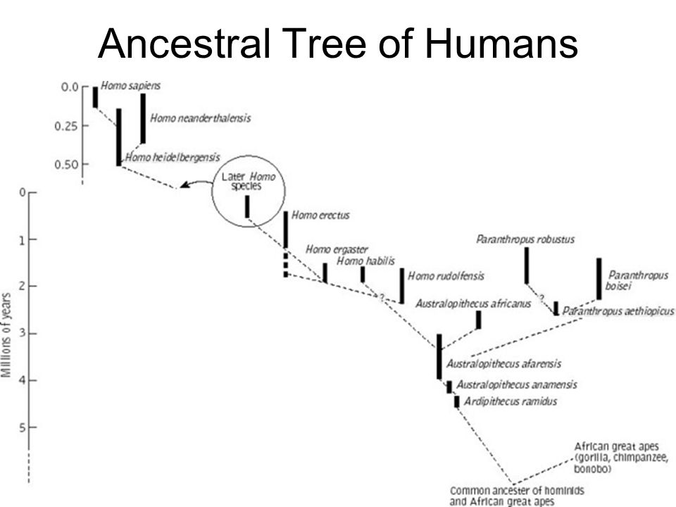 Ancestral Tree of Humans