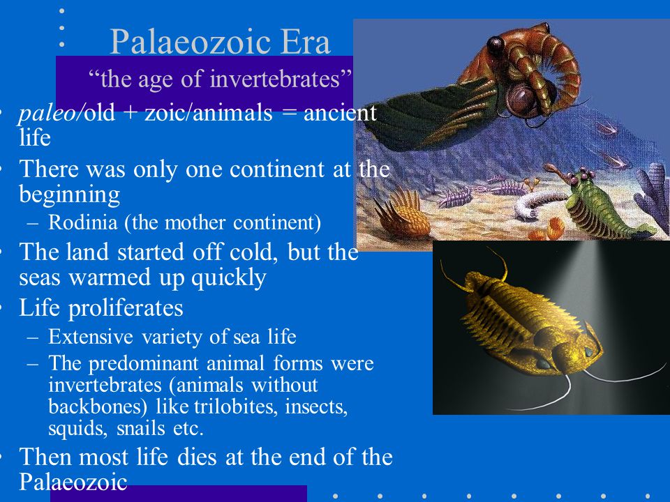 Palaeozoic Era the age of invertebrates paleo/old + zoic/animals = ancient life There was only one continent at the beginning –Rodinia (the mother con