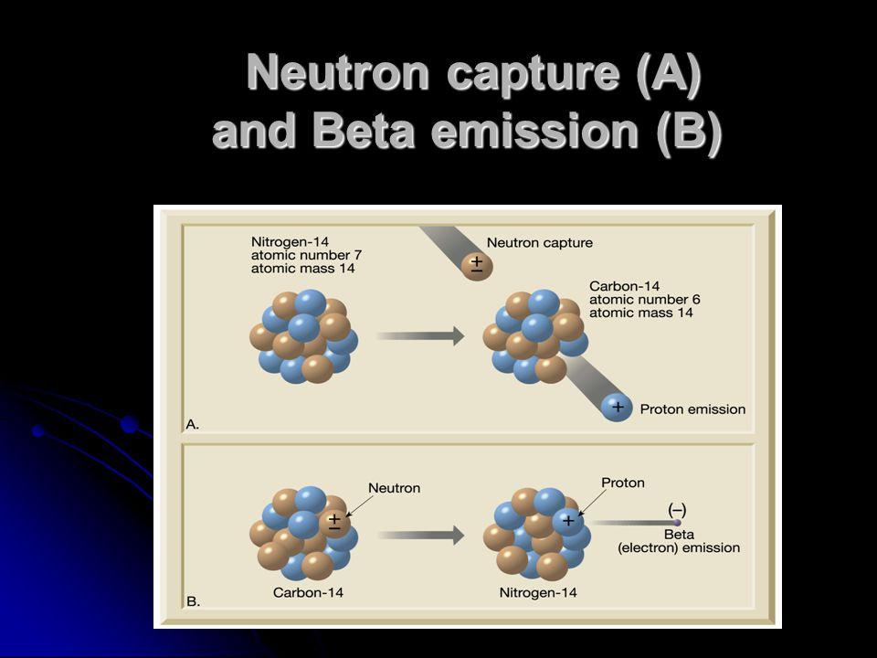 Neutron capture (A) and Beta emission (B) Neutron capture (A) and Beta emission (B)