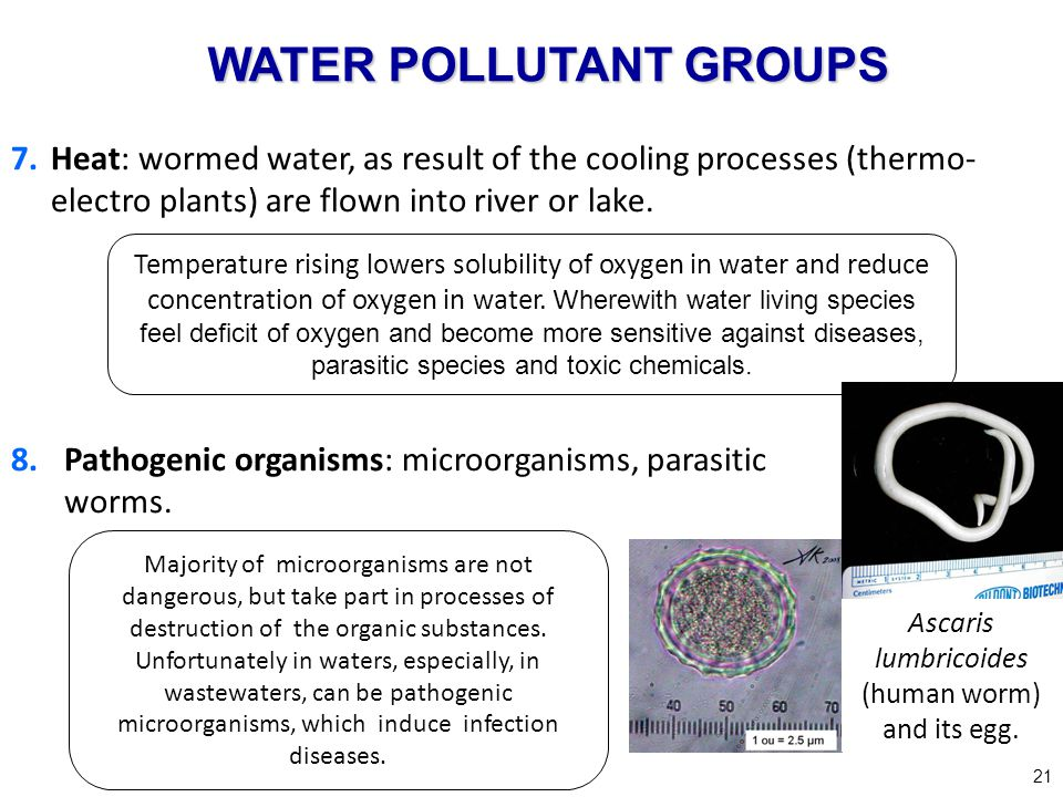 8.Pathogenic organisms: microorganisms, parasitic worms. 21 7.Heat: wormed water, as result of the cooling processes (thermo- electro plants) are flow