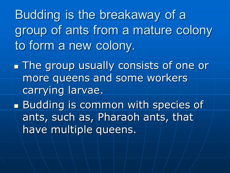 Budding is the breakaway of a group of ants from a mature colony to form a new colony. The group usually consists of one or more queens and some worke
