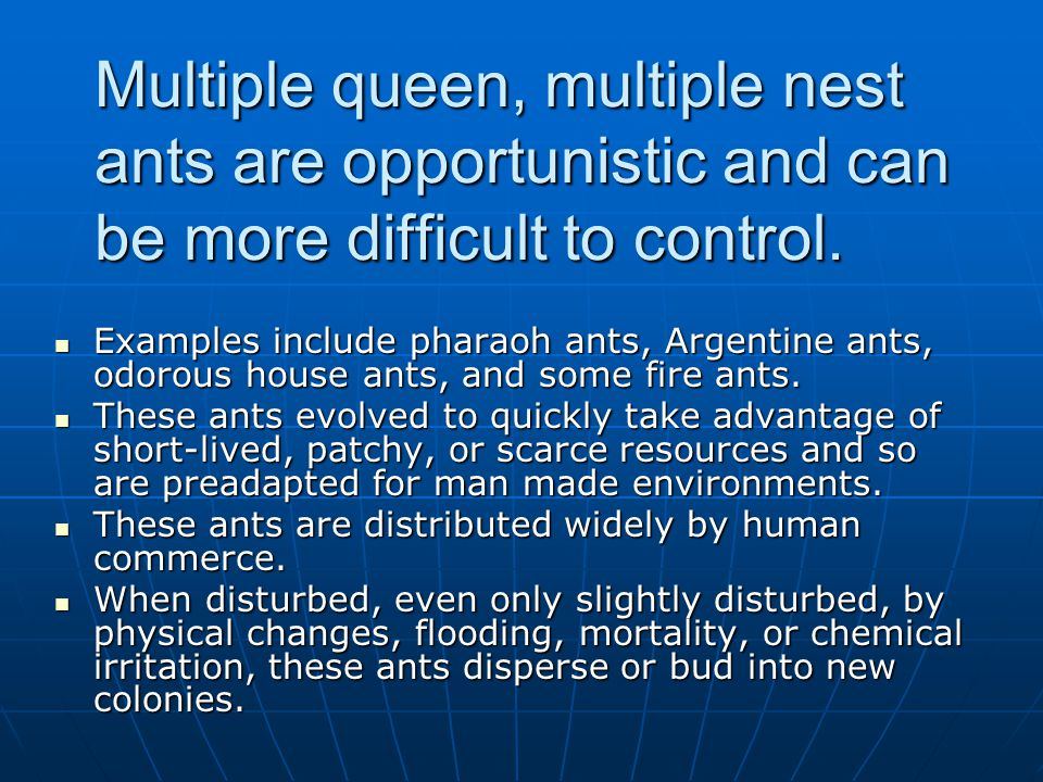 Multiple queen, multiple nest ants are opportunistic and can be more difficult to control. Examples include pharaoh ants, Argentine ants, odorous hous