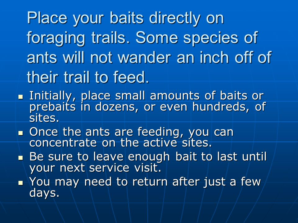 Place your baits directly on foraging trails. Some species of ants will not wander an inch off of their trail to feed. Initially, place small amounts