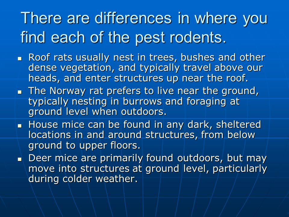There are differences in where you find each of the pest rodents. Roof rats usually nest in trees, bushes and other dense vegetation, and typically tr