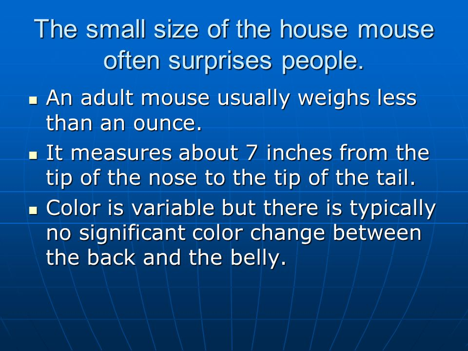 The small size of the house mouse often surprises people. An adult mouse usually weighs less than an ounce. An adult mouse usually weighs less than an