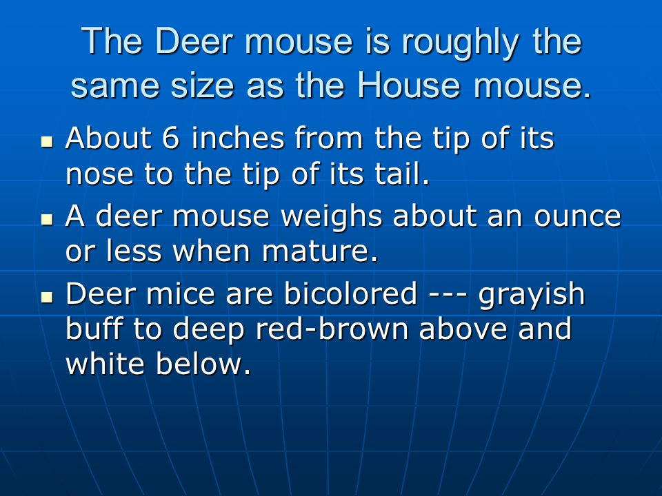 The Deer mouse is roughly the same size as the House mouse. About 6 inches from the tip of its nose to the tip of its tail. About 6 inches from the ti