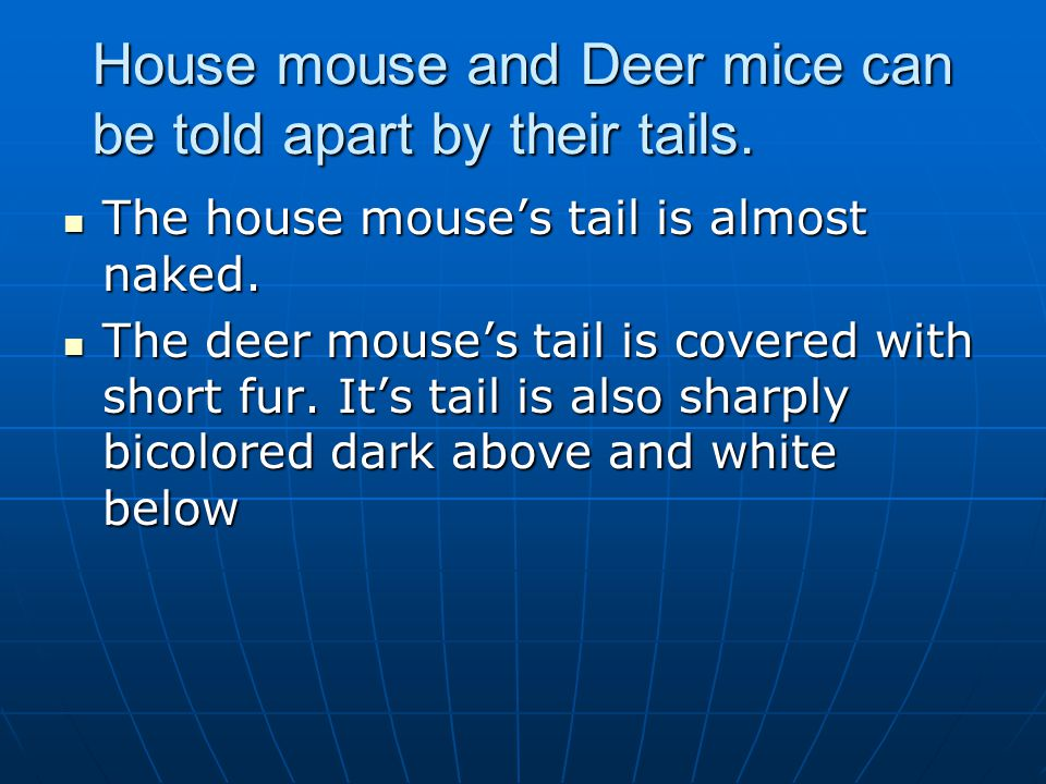 House mouse and Deer mice can be told apart by their tails. The house mouses tail is almost naked. The house mouses tail is almost naked. The deer mou