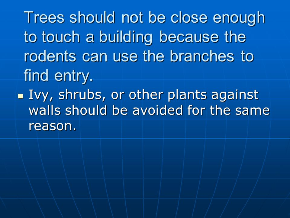 Trees should not be close enough to touch a building because the rodents can use the branches to find entry. Ivy, shrubs, or other plants against wall