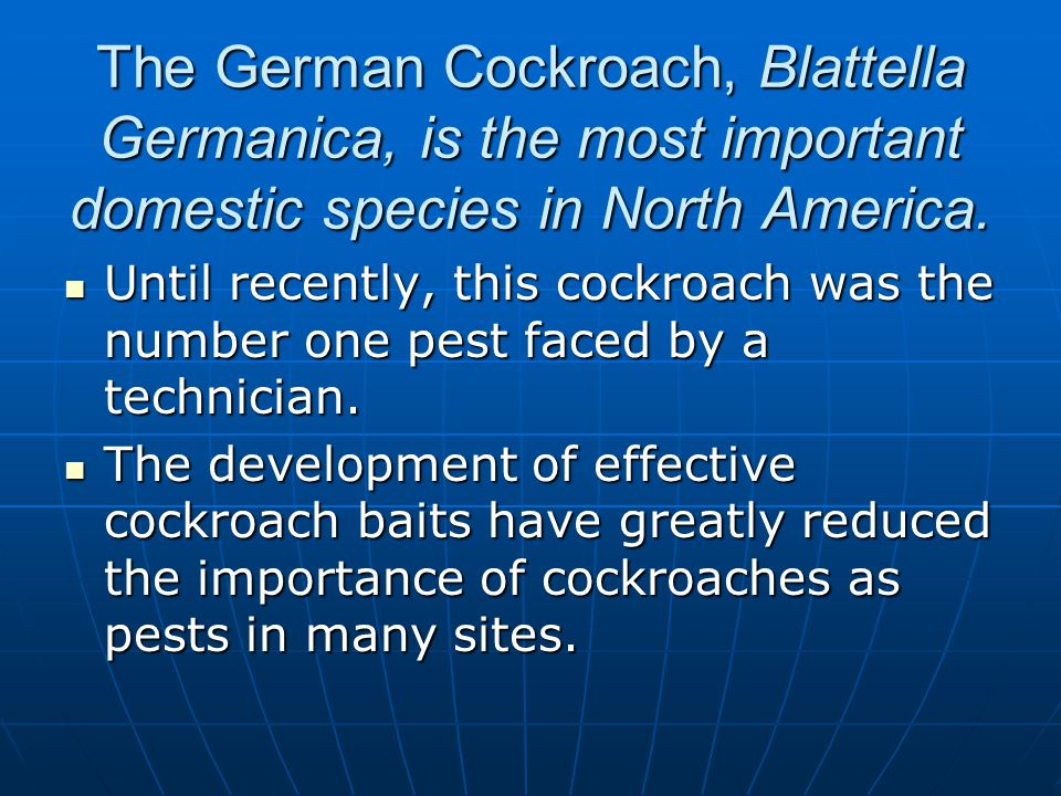 The German Cockroach, Blattella Germanica, is the most important domestic species in North America. Until recently, this cockroach was the number one