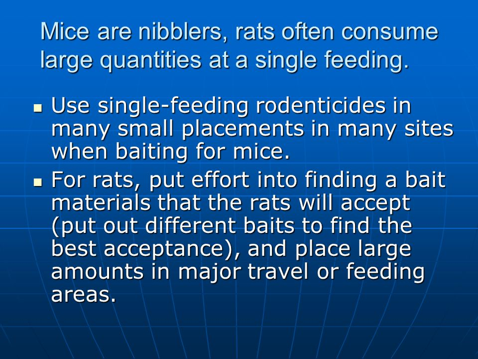Mice are nibblers, rats often consume large quantities at a single feeding. Use single-feeding rodenticides in many small placements in many sites whe