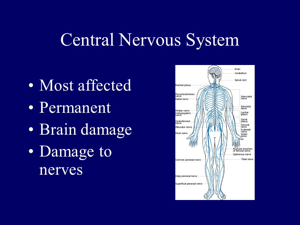 Central Nervous System Most affected Permanent Brain damage Damage to nerves
