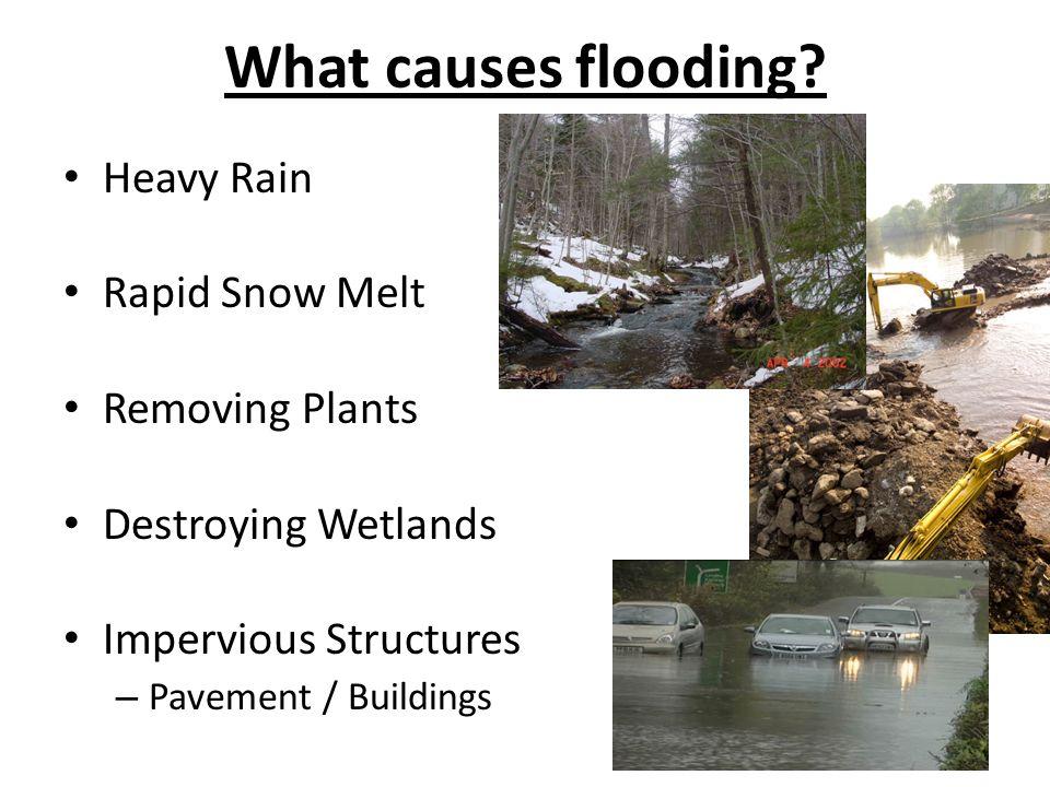What causes flooding? Heavy Rain Rapid Snow Melt Removing Plants Destroying Wetlands Impervious Structures – Pavement / Buildings
