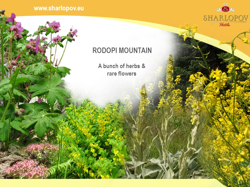 RODOPI MOUNTAIN A bunch of herbs & rare flowers
