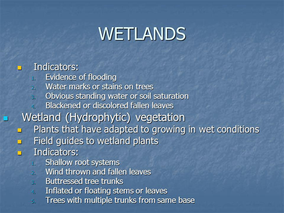 WETLANDS Indicators: Indicators: 1. Evidence of flooding 2. Water marks or stains on trees 3. Obvious standing water or soil saturation 4. Blackened o