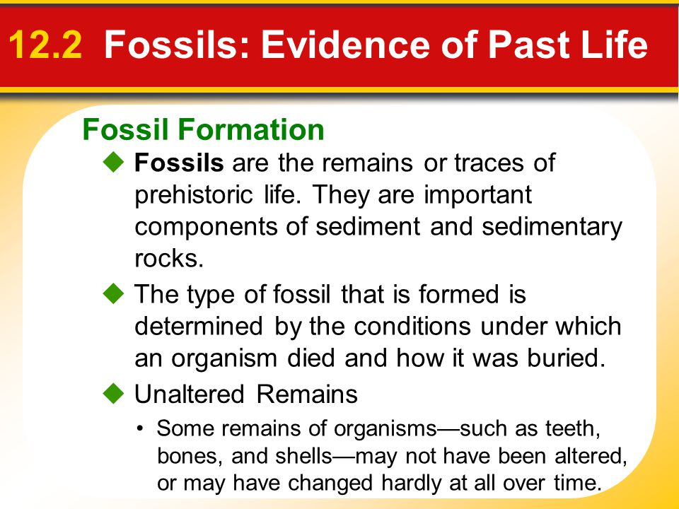 Fossil Formation 12.2 Fossils: Evidence of Past Life Fossils are the remains or traces of prehistoric life. They are important components of sediment