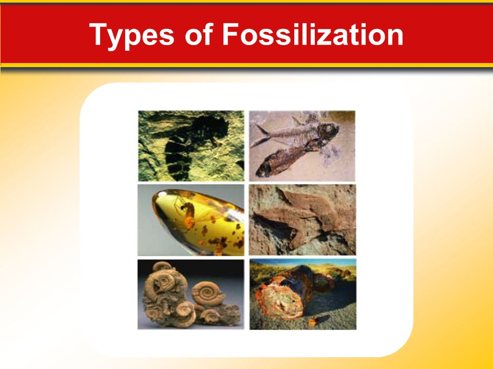 Fossils and Correlation 12.2 Fossils: Evidence of Past Life The principle of fossil succession states that fossil organisms succeed one another in a definite and determinable order.