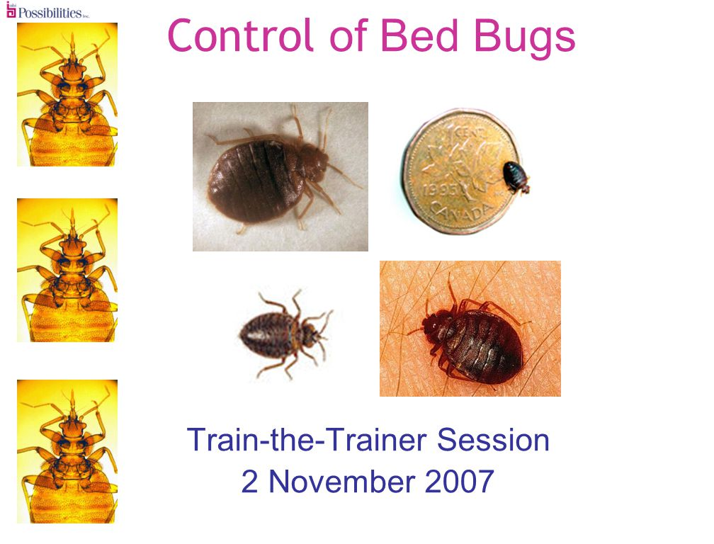 Control of Bed Bugs Train-the-Trainer Session 2 November 2007