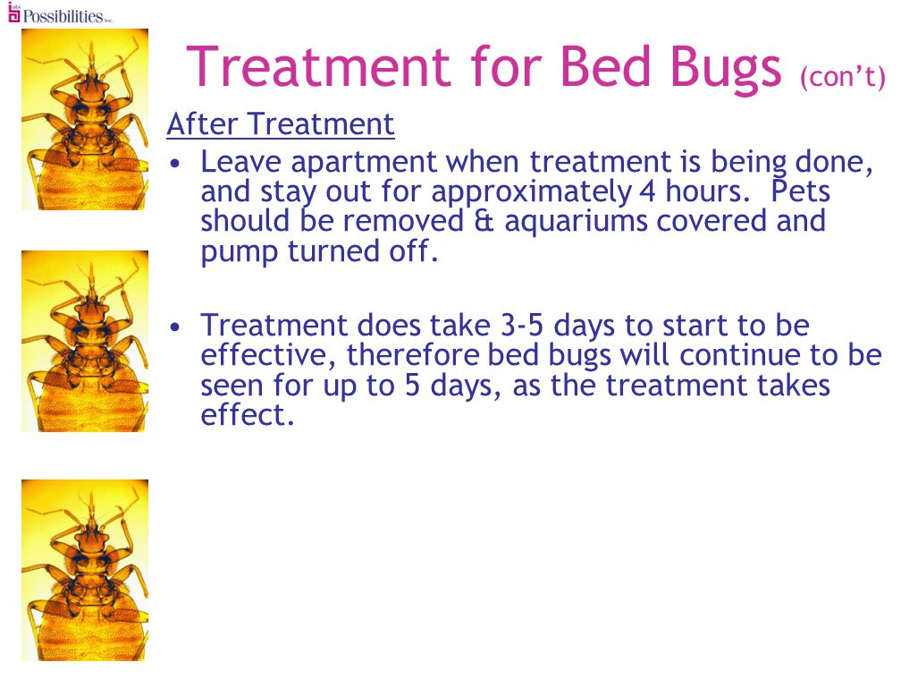 Treatment for Bed Bugs (cont) After Treatment Leave apartment when treatment is being done, and stay out for approximately 4 hours.