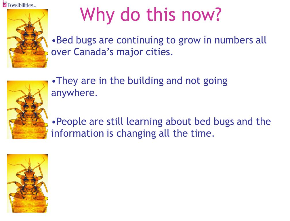 Why do this now.Bed bugs are continuing to grow in numbers all over Canadas major cities.