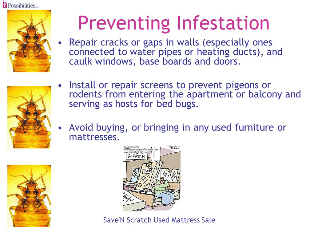 Preventing Infestation Repair cracks or gaps in walls (especially ones connected to water pipes or heating ducts), and caulk windows, base boards and doors.