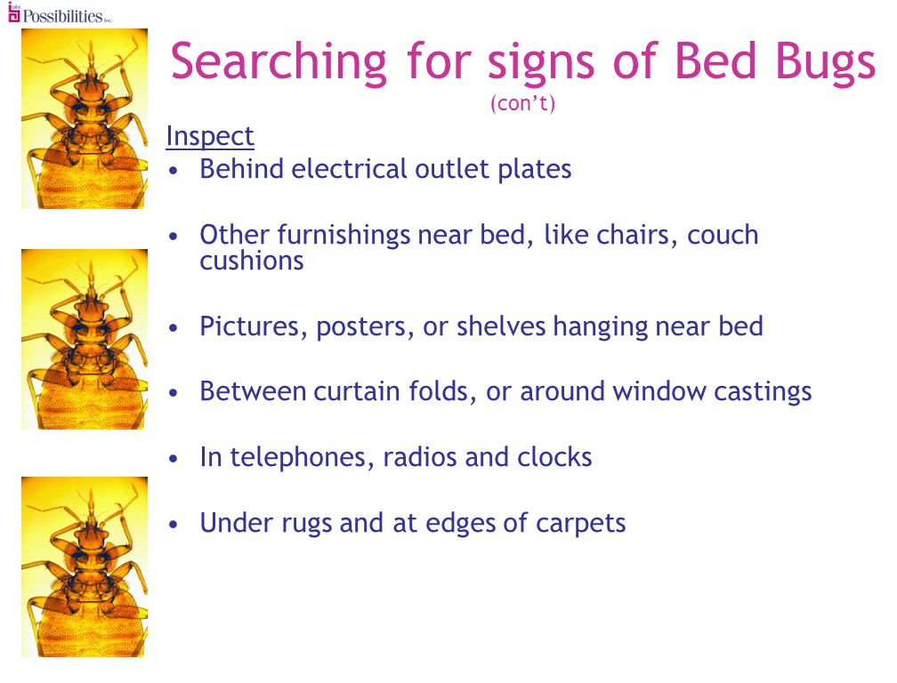 Searching for signs of Bed Bugs (cont) Inspect Behind electrical outlet plates Other furnishings near bed, like chairs, couch cushions Pictures, posters, or shelves hanging near bed Between curtain folds, or around window castings In telephones, radios and clocks Under rugs and at edges of carpets