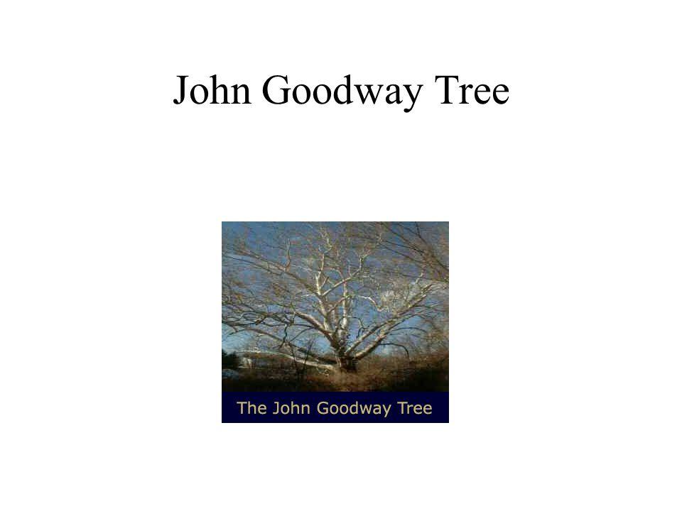 John Goodway Tree