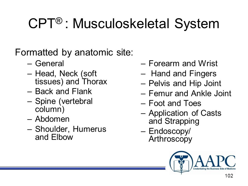 CPT ® : Musculoskeletal System Formatted by anatomic site: –General –Head, Neck (soft tissues) and Thorax –Back and Flank –Spine (vertebral column) –Abdomen –Shoulder, Humerus and Elbow –Forearm and Wrist – Hand and Fingers –Pelvis and Hip Joint –Femur and Ankle Joint –Foot and Toes –Application of Casts and Strapping –Endoscopy/ Arthroscopy 102