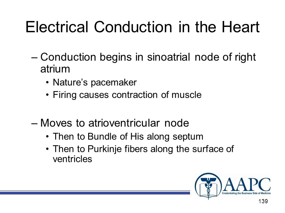 Electrical Conduction in the Heart –Conduction begins in sinoatrial node of right atrium Natures pacemaker Firing causes contraction of muscle –Moves to atrioventricular node Then to Bundle of His along septum Then to Purkinje fibers along the surface of ventricles 139