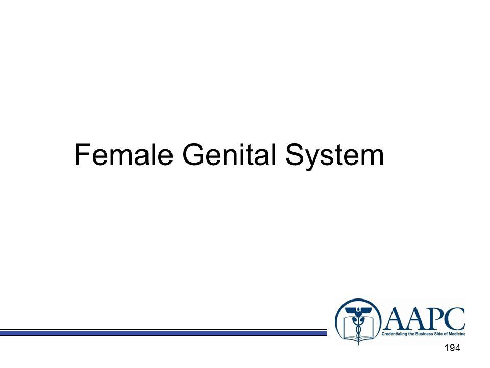Female Genital System 194