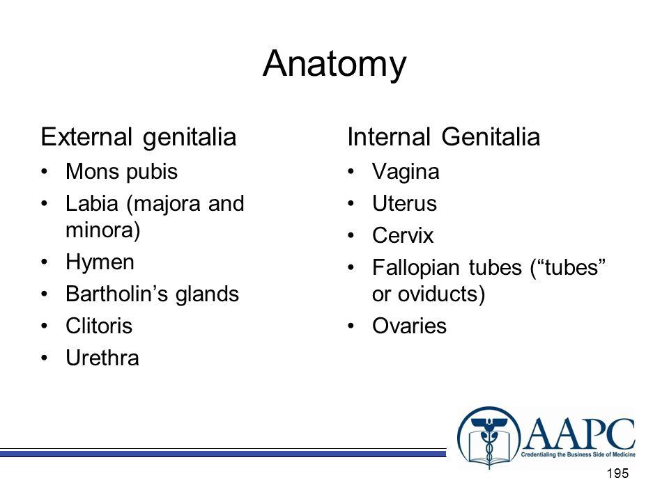 Anatomy External genitalia Mons pubis Labia (majora and minora) Hymen Bartholins glands Clitoris Urethra Internal Genitalia Vagina Uterus Cervix Fallo