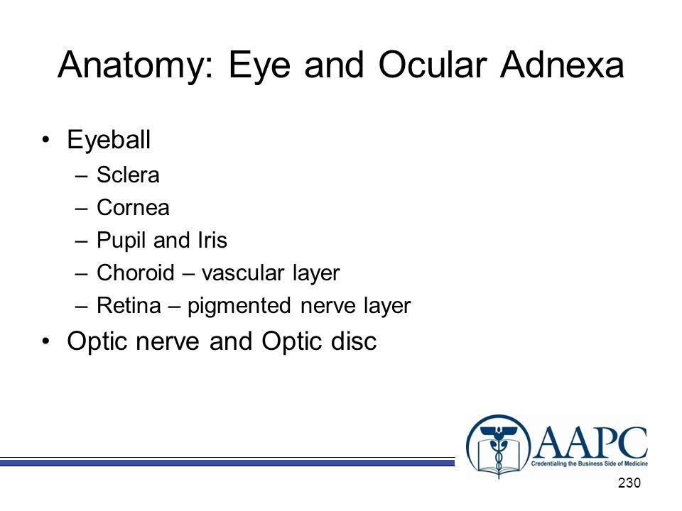 Anatomy: Eye and Ocular Adnexa Eyeball –Sclera –Cornea –Pupil and Iris –Choroid – vascular layer –Retina – pigmented nerve layer Optic nerve and Optic