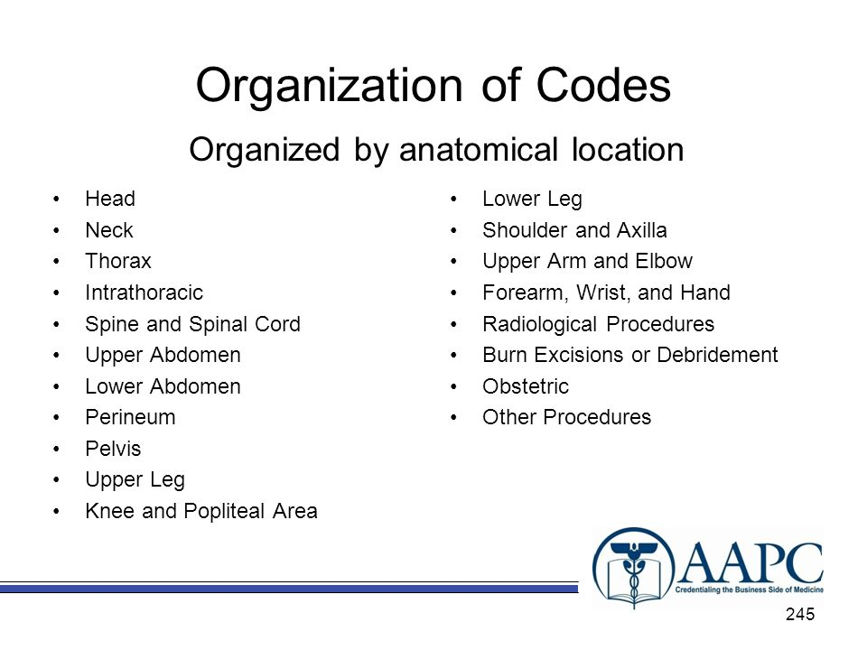 Organization of Codes Head Neck Thorax Intrathoracic Spine and Spinal Cord Upper Abdomen Lower Abdomen Perineum Pelvis Upper Leg Knee and Popliteal Area Lower Leg Shoulder and Axilla Upper Arm and Elbow Forearm, Wrist, and Hand Radiological Procedures Burn Excisions or Debridement Obstetric Other Procedures Organized by anatomical location 245