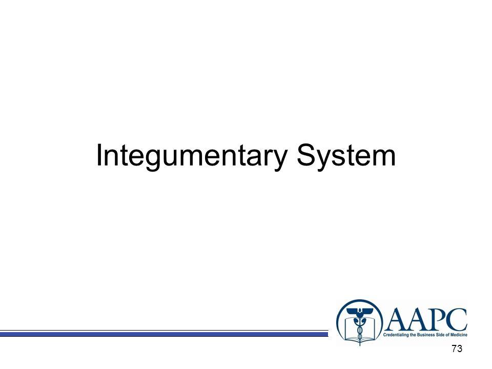 Integumentary System 73