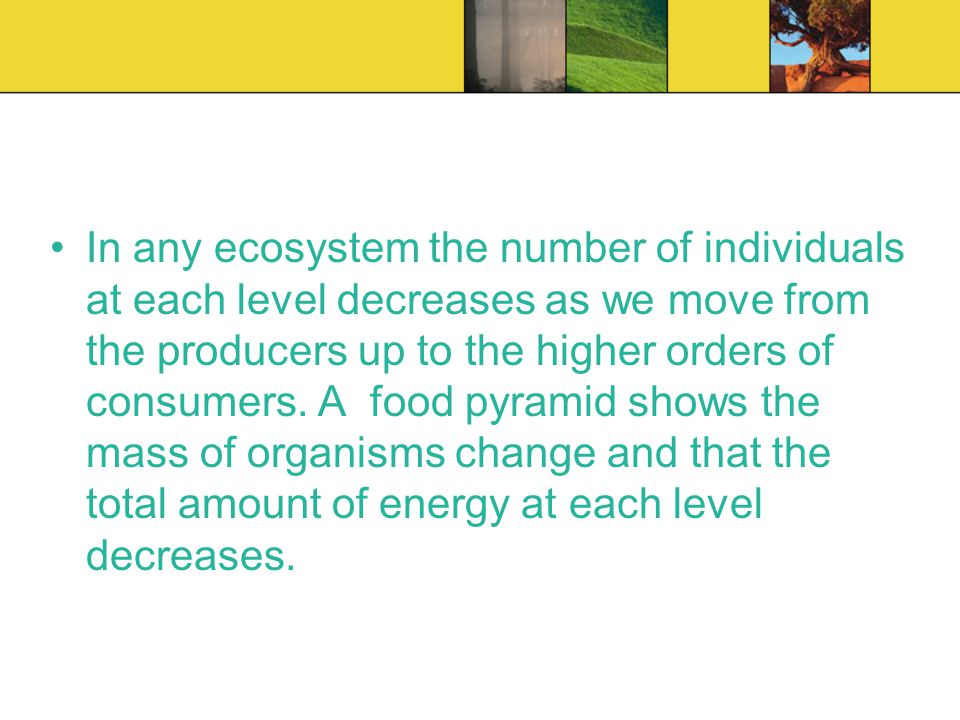 In any ecosystem the number of individuals at each level decreases as we move from the producers up to the higher orders of consumers. A food pyramid