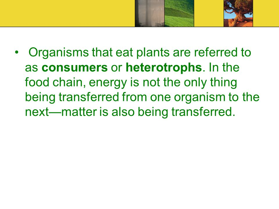 Photosynthesis: is driven by energy from the Sun.
