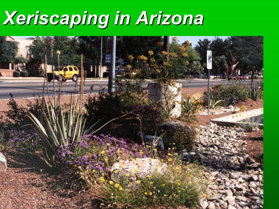 Xeriscaping in Arizona
