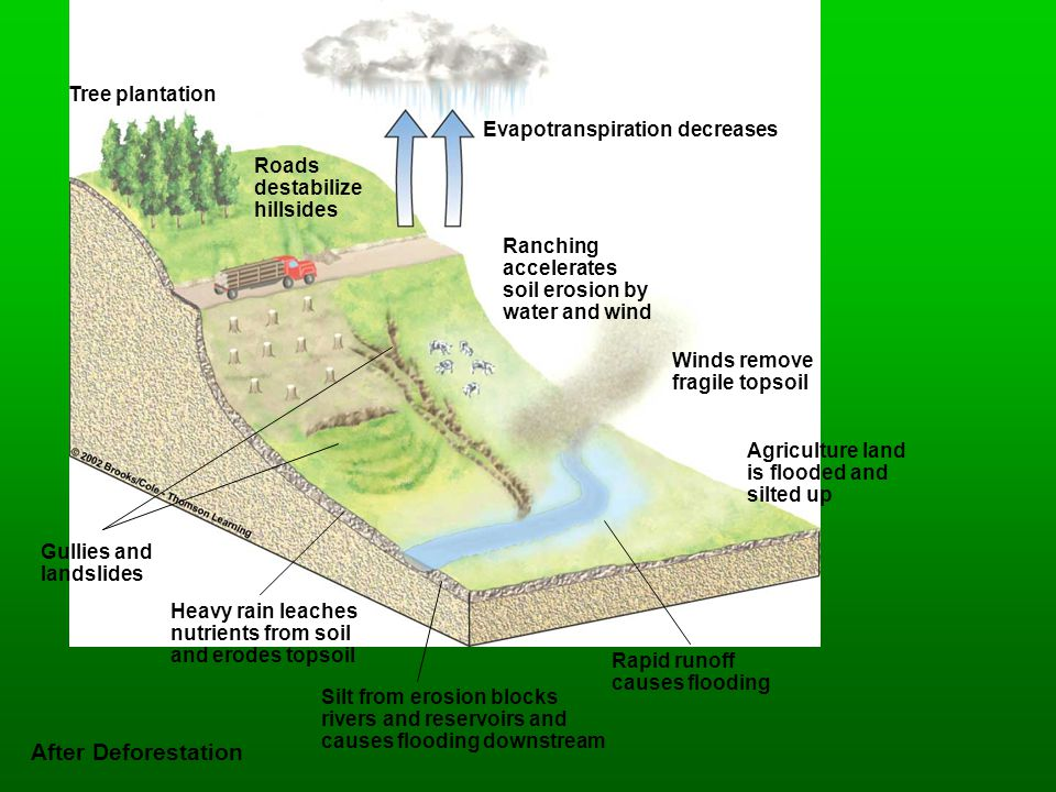 Tree plantation Evapotranspiration decreases Ranching accelerates soil erosion by water and wind Winds remove fragile topsoil Gullies and landslides H