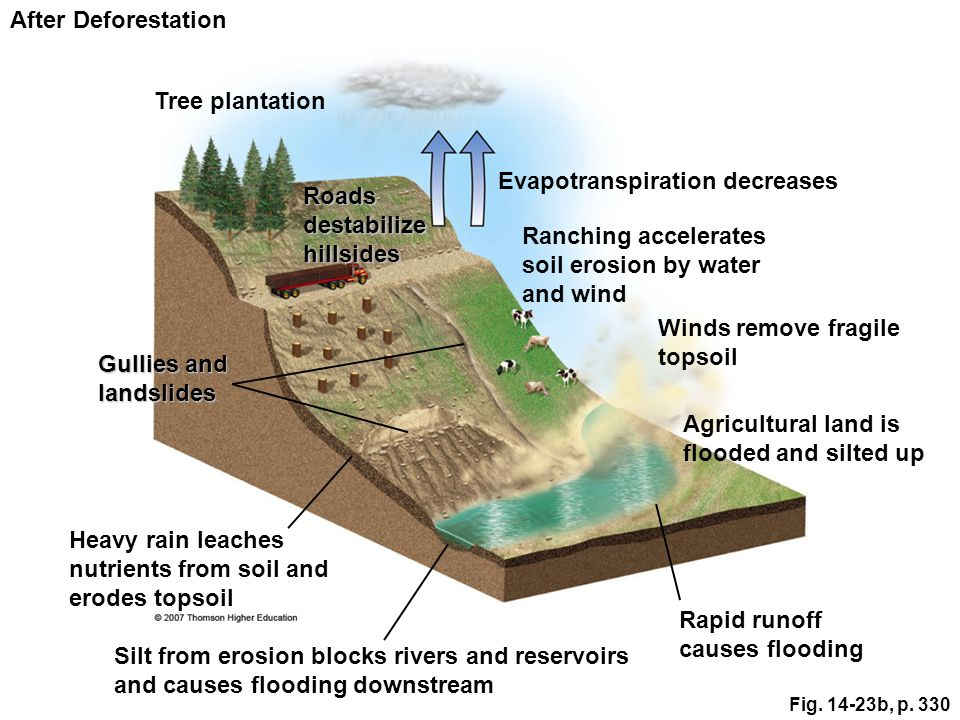 Human activities have contributed to flood deaths and damages.