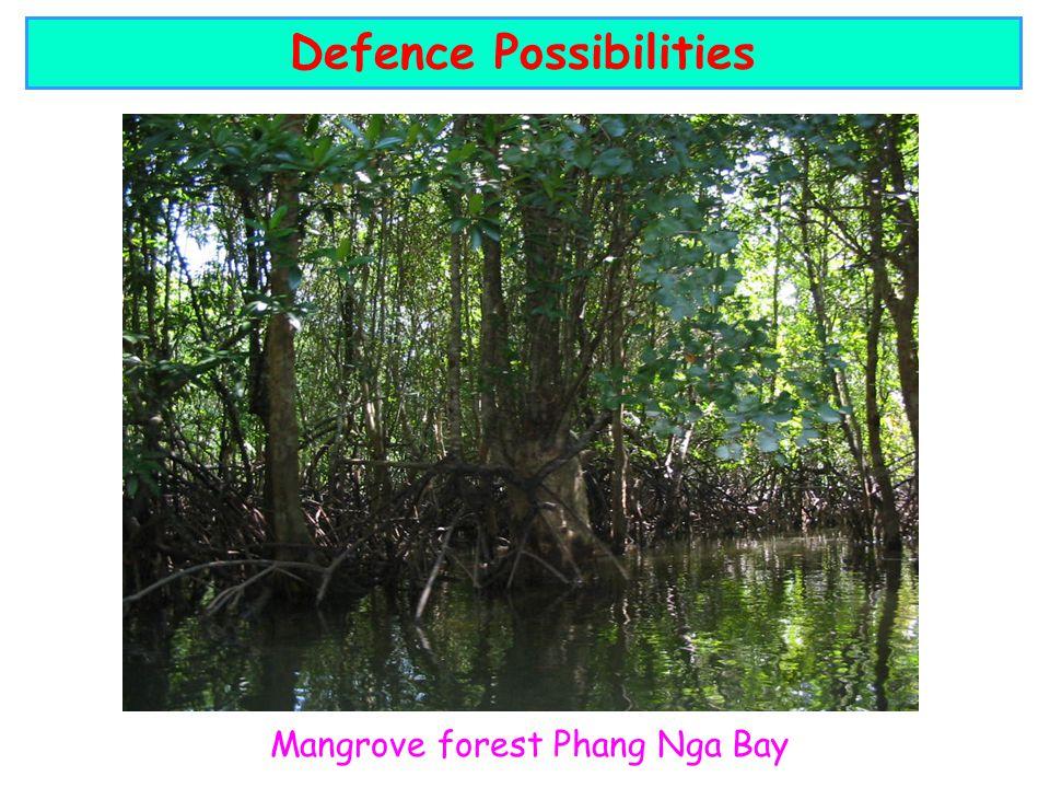 Mangrove forest Phang Nga Bay