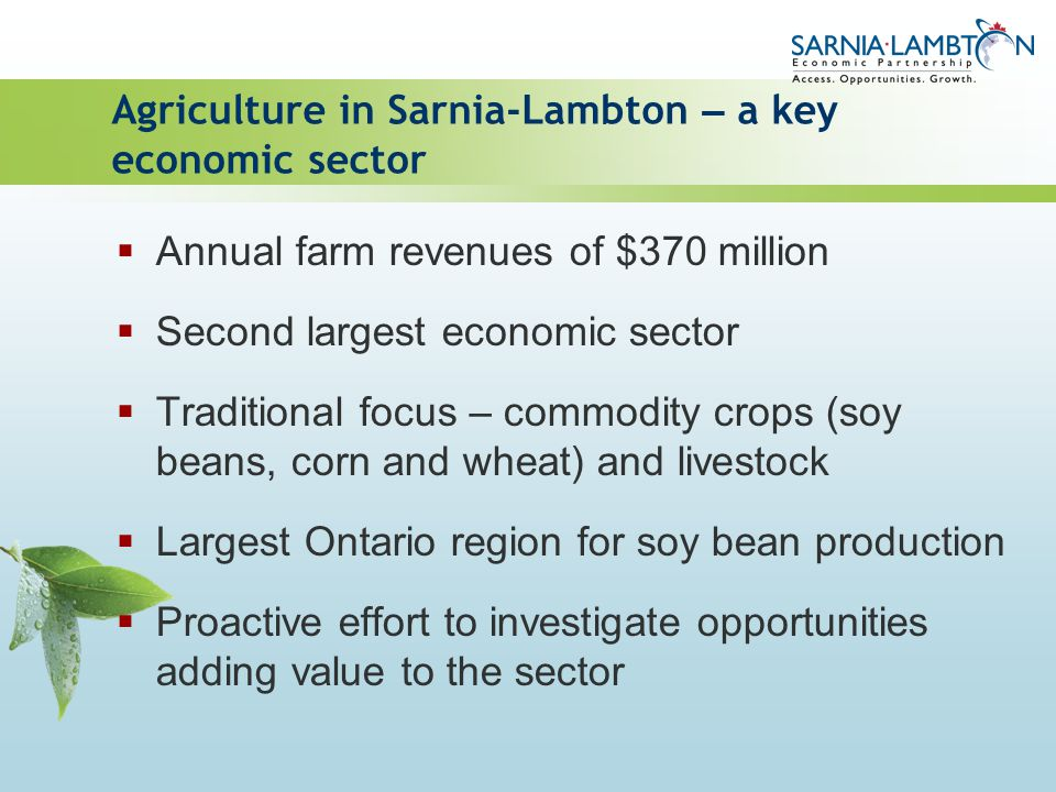 Agriculture in Sarnia-Lambton – a key economic sector Annual farm revenues of $370 million Second largest economic sector Traditional focus – commodit