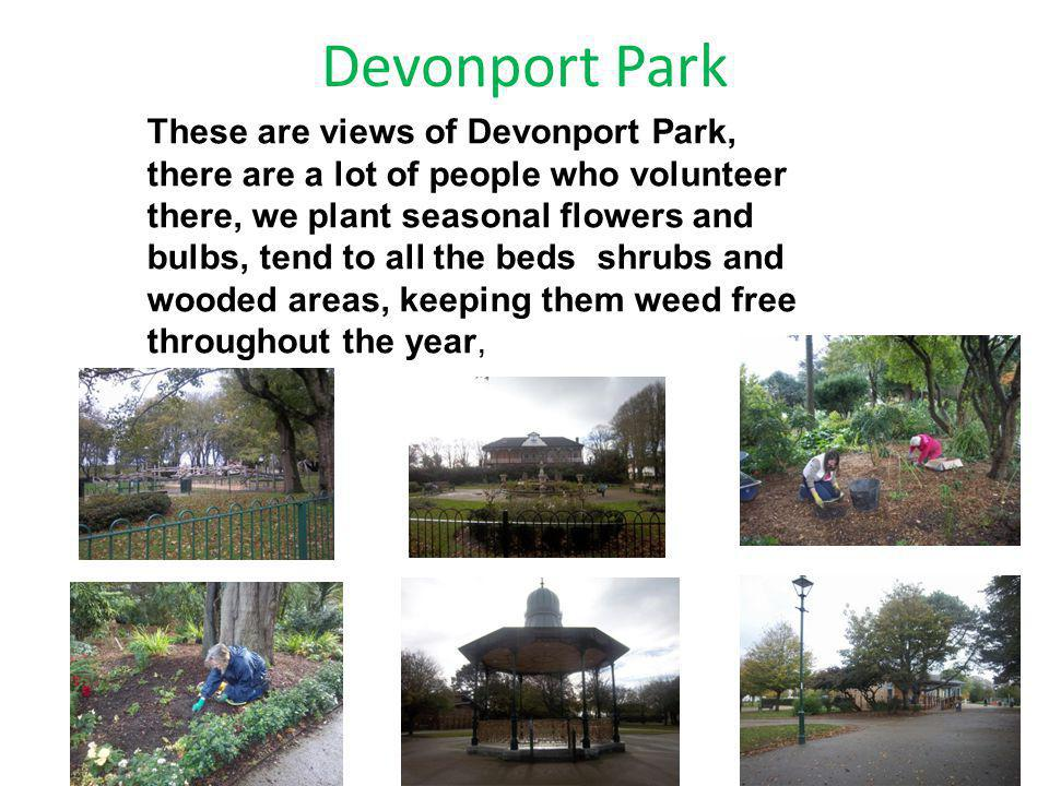 Devonport Park These are views of Devonport Park, there are a lot of people who volunteer there, we plant seasonal flowers and bulbs, tend to all the beds shrubs and wooded areas, keeping them weed free throughout the year,