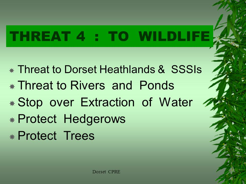 Dorset CPRE THREAT 4 : TO WILDLIFE Threat to Dorset Heathlands & SSSIs Threat to Rivers and Ponds Stop over Extraction of Water Protect Hedgerows Protect Trees