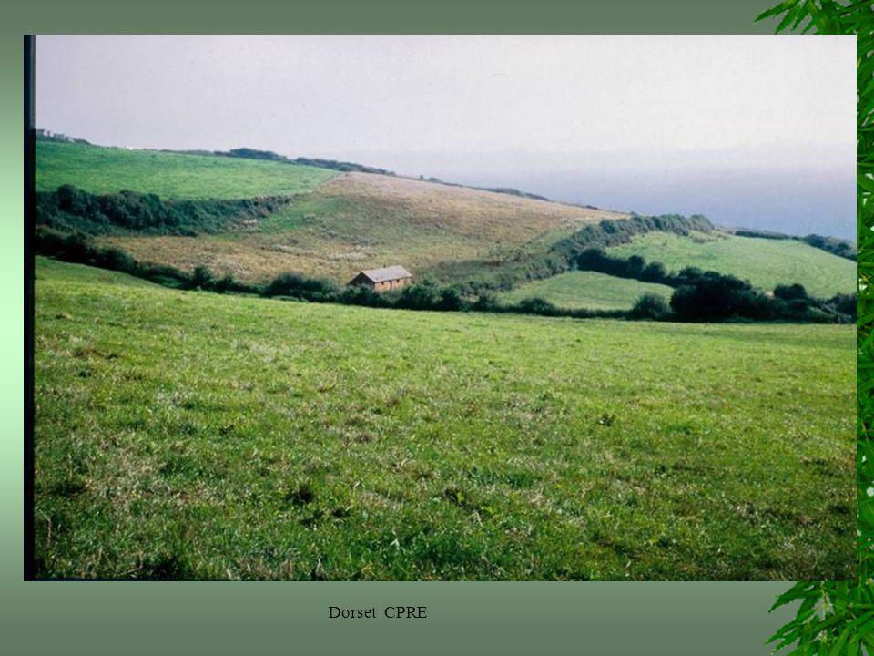 Dorset CPRE